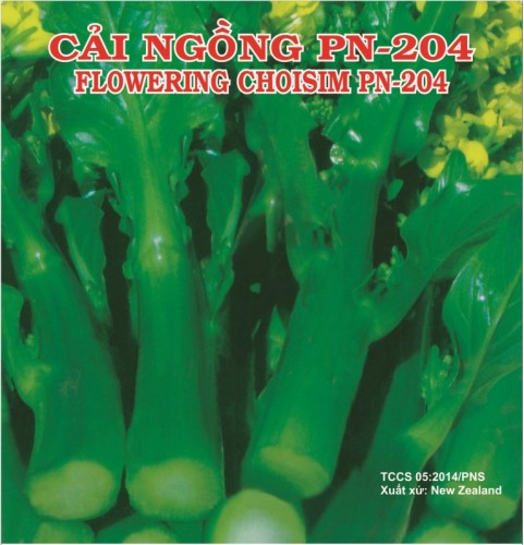 CẢI NGỒNG 204