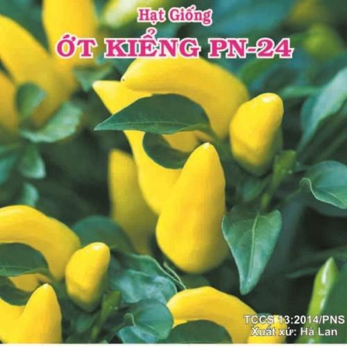 ỚT KIỂNG PN-24